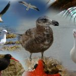 blogdiavogels_1024