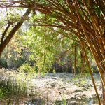 aus 08-09 bamboeXL