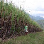 aus 08-09 sugarcaneXL