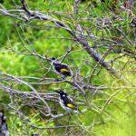 aus 09-10 s005f04birdsXL